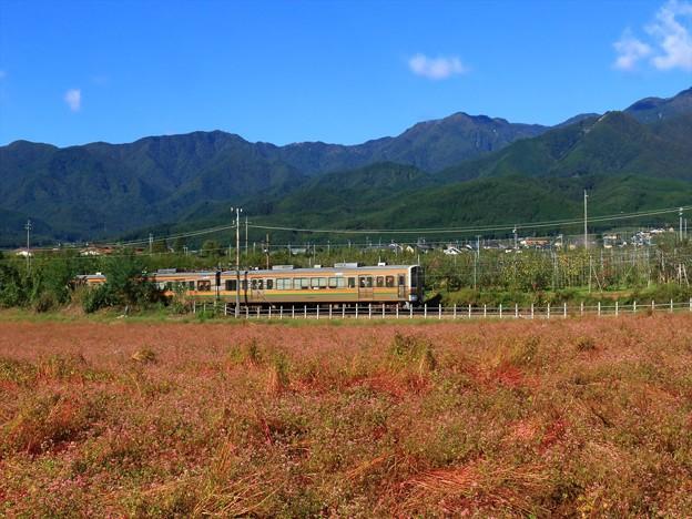 赤そば畑とリンゴ畑 R-1R8A7448
