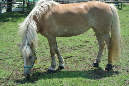 マザー牧場の馬