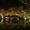 写真: 20161125東山動植物園 (1)