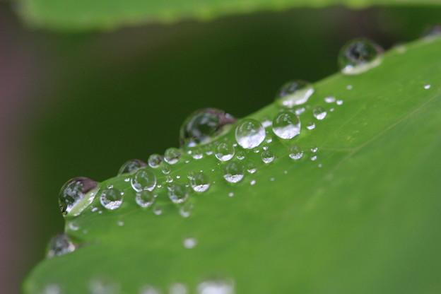 写真: 雨05
