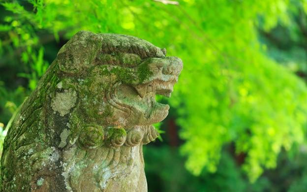 粟田神社06