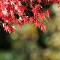 Photos: 神蔵寺17