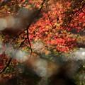 Photos: 神蔵寺16