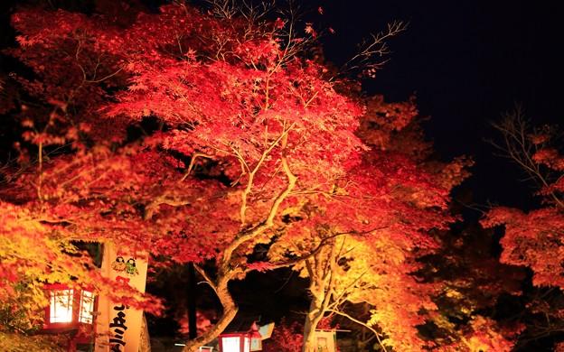 鍬山神社・ライトアップ16