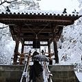 写真: 金閣寺08