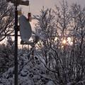 写真: 夜明けの雪景