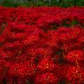 Photos: 紅い絨毯