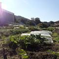 Photos: 畑の風景
