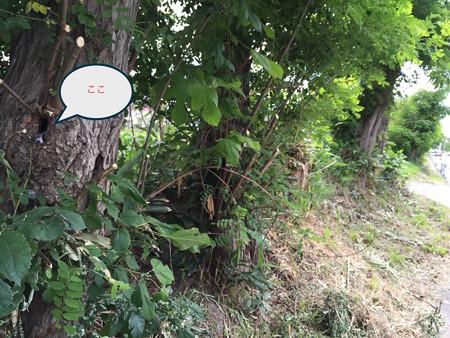 コムクドリの巣1
