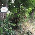 Photos: コムクドリの巣1