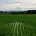 Photos: 水田と富士