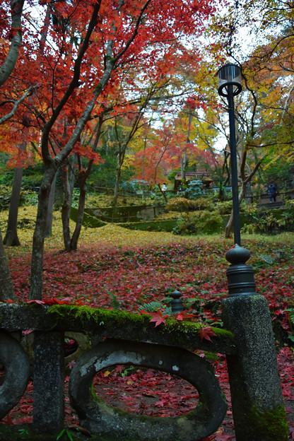 東郷公園 (6)