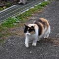 和同開珎の里猫