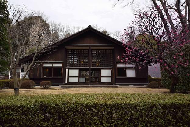 前川國男邸 (5)