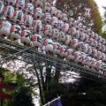 花園神社(二の酉)