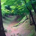写真: 岡崎城 空堀