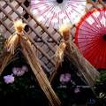Photos: 上野東照宮牡丹苑