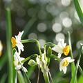 写真: 春を呼ぶ♪
