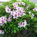 Photos: 花壇に
