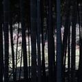 竹林の向こうの梅林