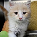 White Cats at Coastal Humane Society