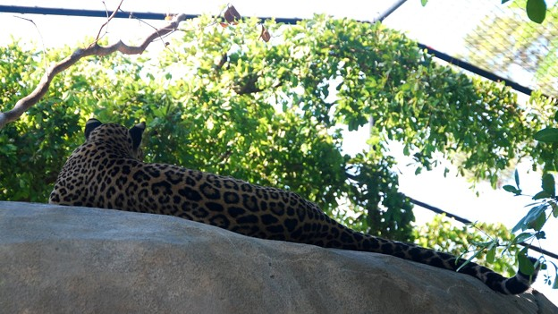 Photos: The Back of the Leopard 6-4-16