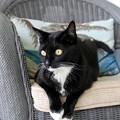 写真: My Favorite Chair 6-7-16