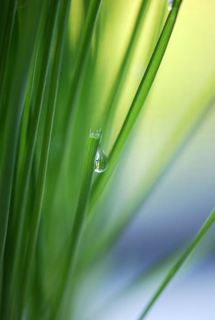 Morning Dew 7-14-16