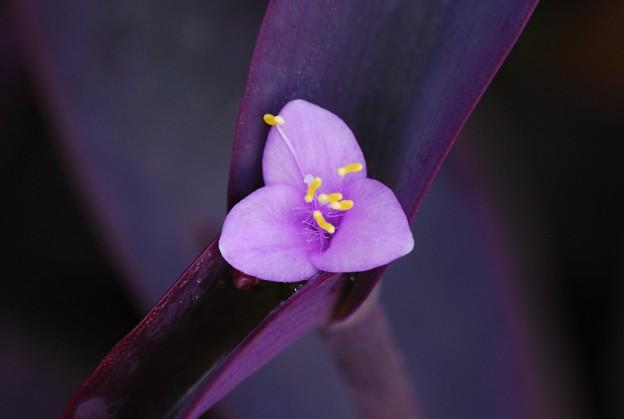 Purple Heart 7-5-16