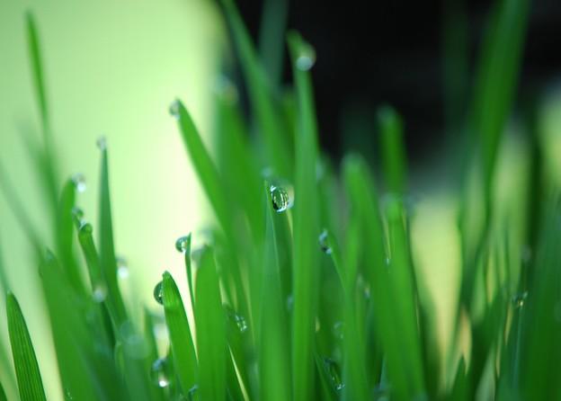 写真: Amore and Her Garden 7-30-16