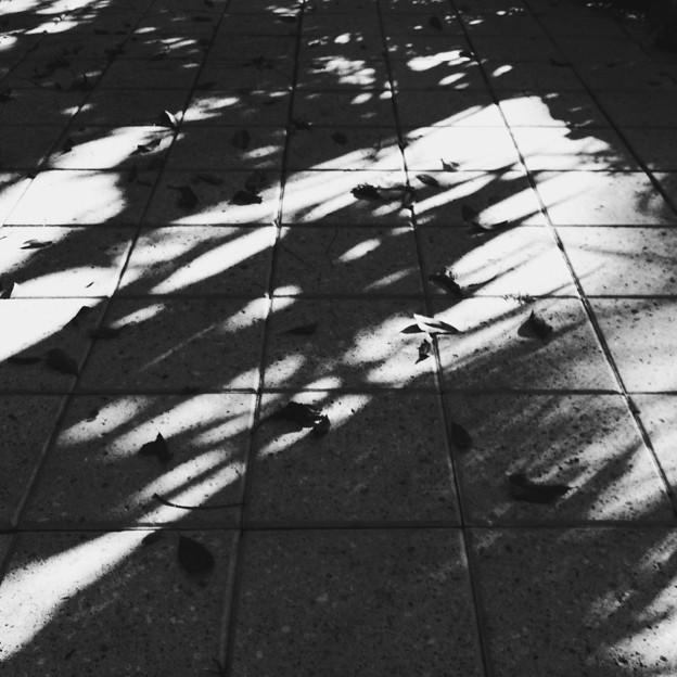 写真: Morning Shadows 8-21-16