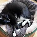 Cat Nap 10-9-16