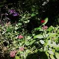 Photos: In the Garden 10-14-16