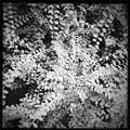 写真: Leaves I 11-15-16