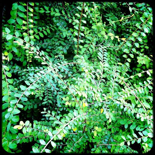 写真: Leaves II 11-15-16