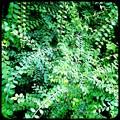 Leaves II 11-15-16