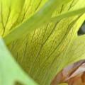 写真: Staghorn Fern II 11-15-16