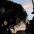 Southern Live Oak Tree in Sunset 12-12-16