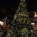 Christmas Tree on the 3rd 2016