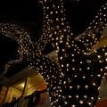 The Tree of Lights 12-12-16