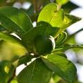 Toxic Fruit 11-29-16