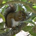 Photos: Eastern gray squirrel 1-13-16