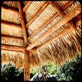 写真: Tiki Hut 2-20-17
