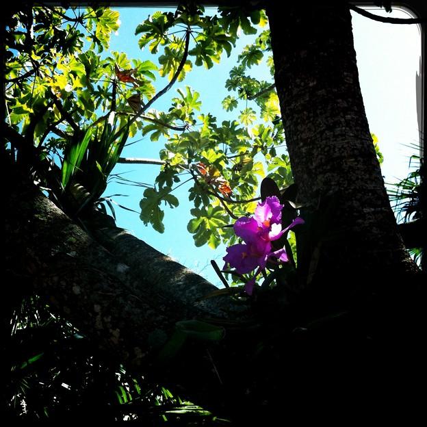 On the Snakewood Tree 3-18-17