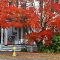 Japanese Maple by the House