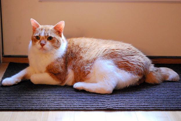 The King of Doormat 2-8-09
