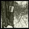 Maple Sap Bucket