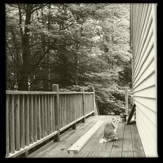 Billy on the Deck 8-15-11
