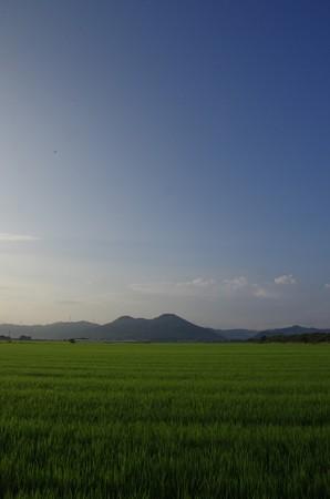 初秋の田園朝景色