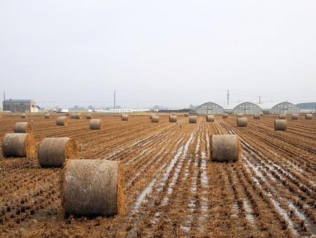 雨上がりの初冬の田園風景